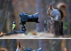 Enlace a Su pasión es la fotografía