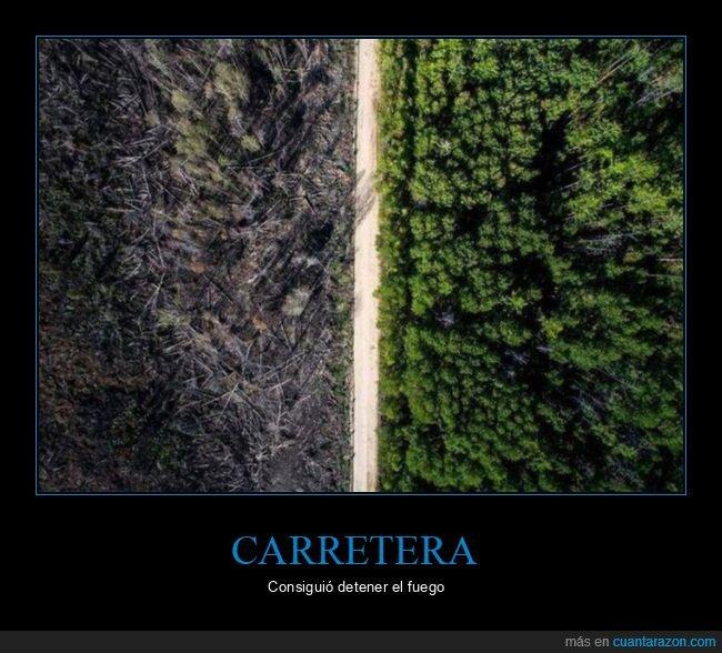 bosque,carretera,fuego,incendio