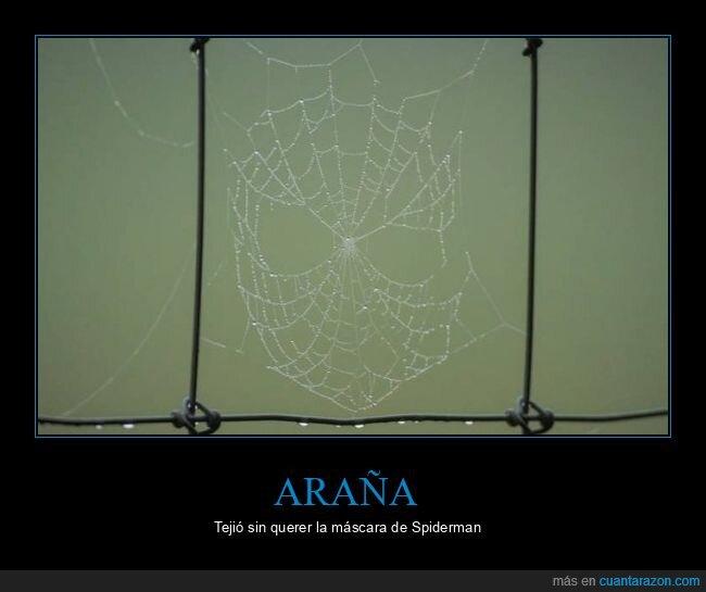 araña,spiderman,telaraña