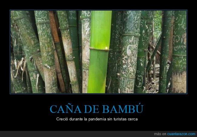 caña de bambú,turistas