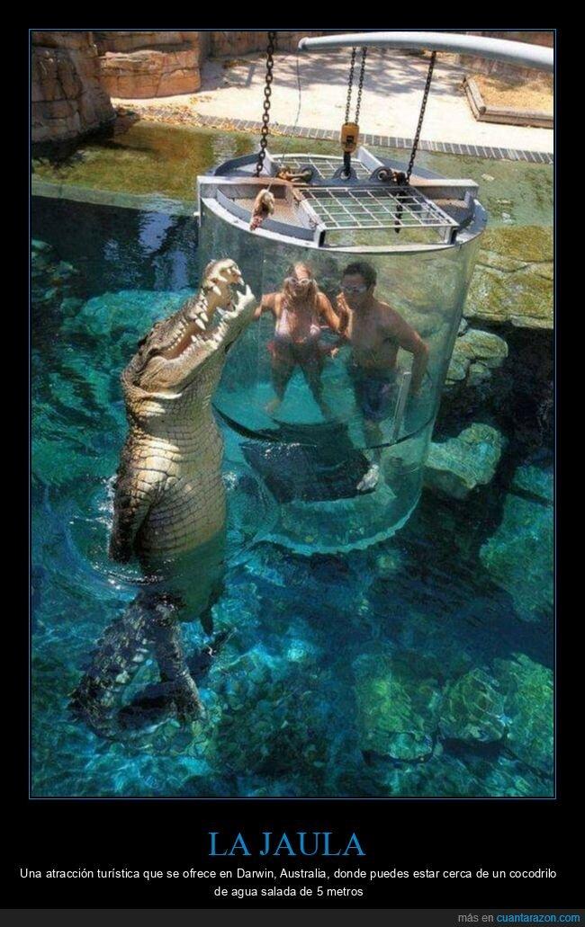 australia,cocodrilos,jaula