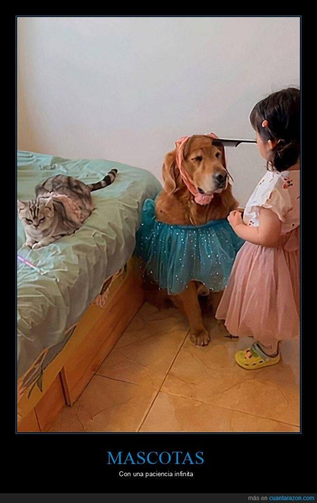 gato,jugando,mascotas,niña,perro