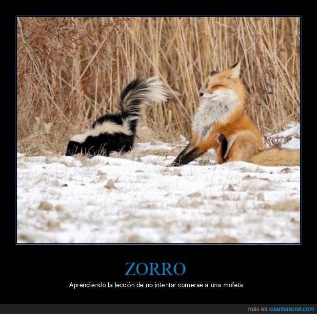 mofeta,zorro