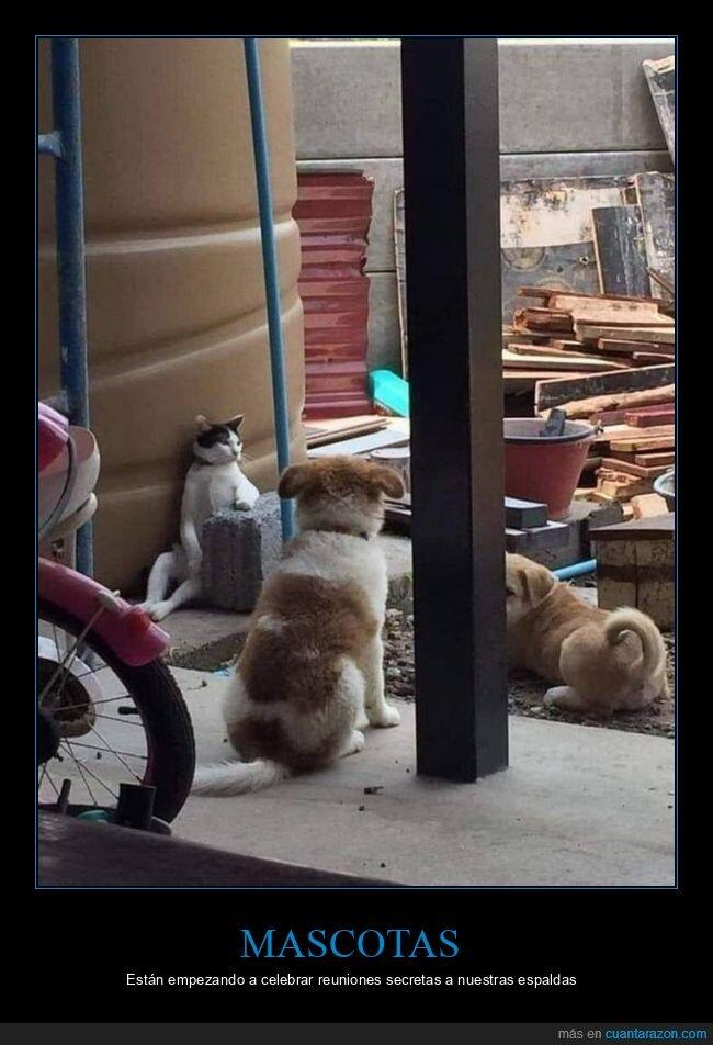 gato,perros,reunión