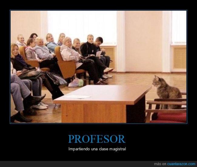 clase,gato,wtf