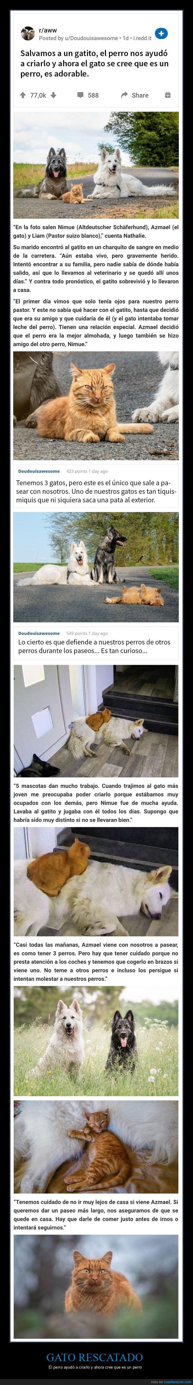 gato,perro,rescatado