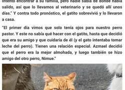 Enlace a Salvaron a un gatito, el perro les ayudó a criarlo y ahora el gato cree que es un perro
