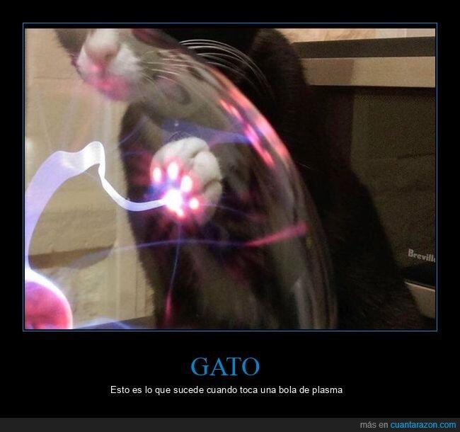 bola de plasma,gato,pata