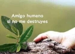 Enlace a Tendiendo la mano a la naturaleza