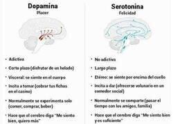 Enlace a Dopamina VS Serotonina