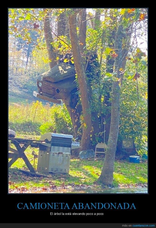 abandonada,árbol,camioneta