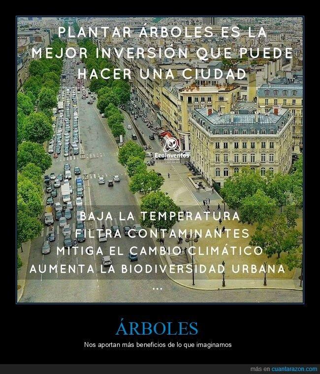 árboles,ciudades,plantar