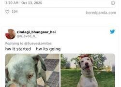 """Enlace a De las mejores reacciones de dueños de mascotas ante el desafío de """"Cómo empezó"""" VS """"Cómo acabó"""""""