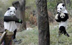 Enlace a Enseñando al pequeño panda