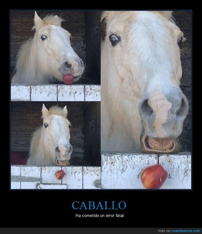 caballo,fails,manzana
