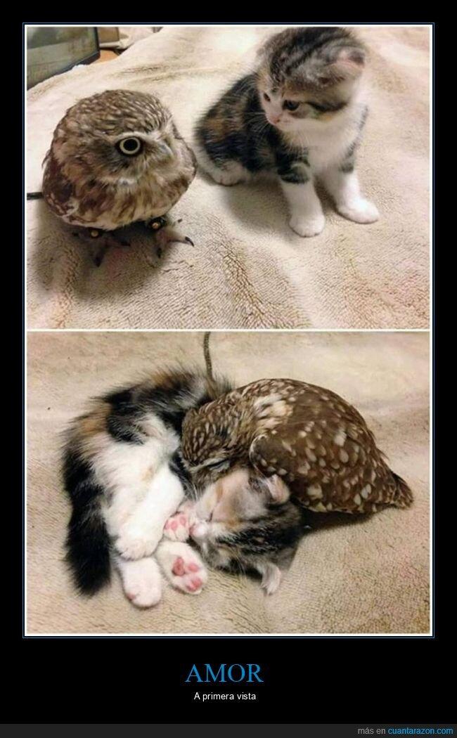 búho,gato
