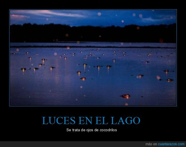 cocodrilos,lago,luces,ojos