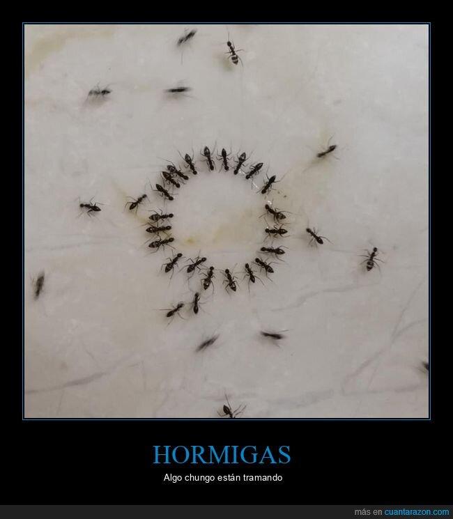 círculo,hormigas,wtf
