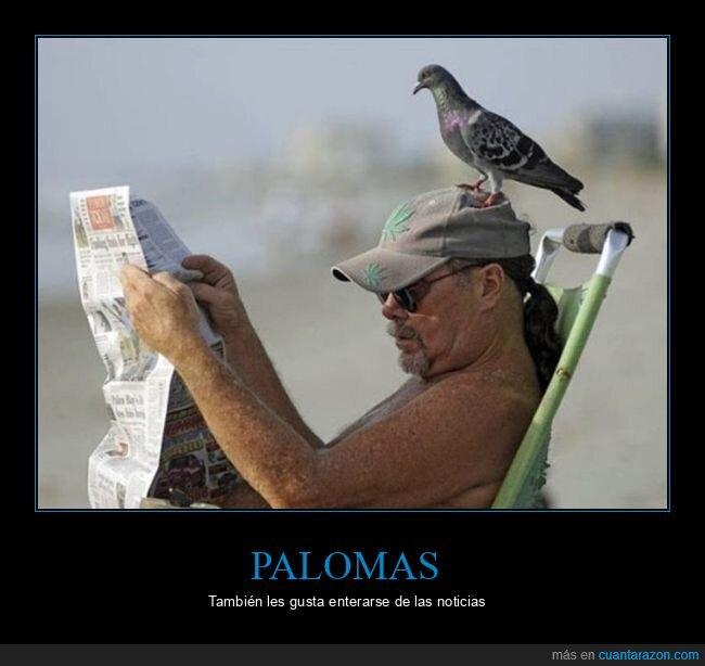 cabeza,paloma,periódico