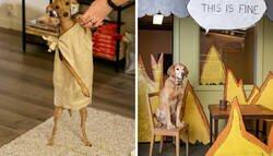 Enlace a Mascotas que triunfaron con sus disfraces de Halloween