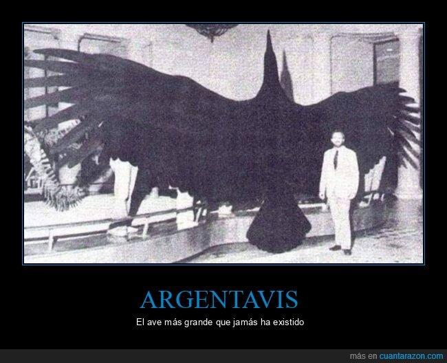 argentavis,ave,gigante