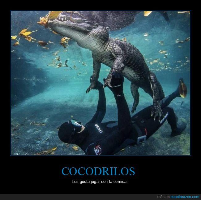buceador,cocodrilo,jugando