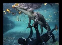 Enlace a Juegos acuáticos