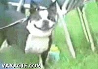 Enlace a Perro feliz