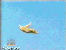Enlace a Gato volador