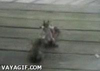 Enlace a La técnica de la ardilla muerta