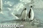 Enlace a Pingüino cabrón