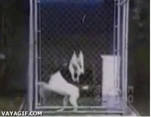 Enlace a Sincronización canina
