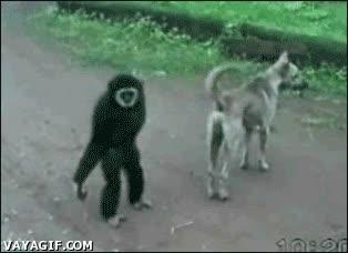Enlace a El mono travieso