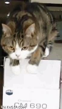Enlace a ¿El gato de Snake? (Slow-Motion)
