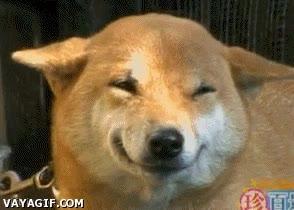 Enlace a El perro feliz
