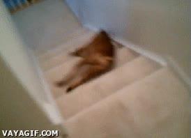 Enlace a Perro vago