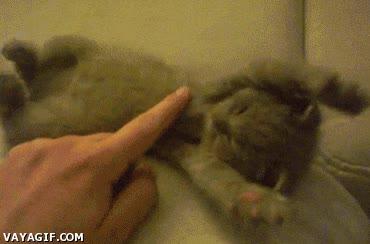 Enlace a Gatito sorpresa