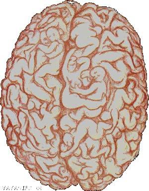 Enlace a Tu cerebro sólo piensa en sexo