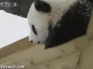 Enlace a El tobogán de los pandas