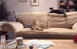 Enlace a Este gato da muy mal rollo