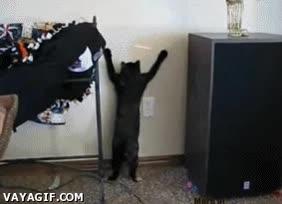 Enlace a Gato loco