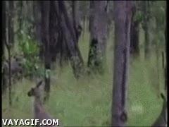 Enlace a ¿Qué estará haciendo el canguro?