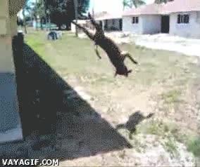 Enlace a El perro saltimbanqui