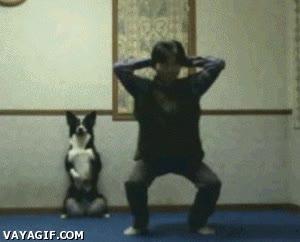Enlace a Gimnasia con tu perro