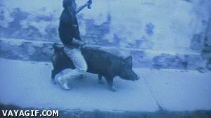 Enlace a Para qué utilizar caballos teniendo cerdos