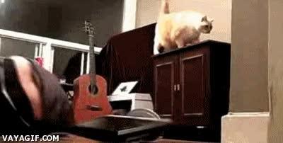 Enlace a Maldito Gato
