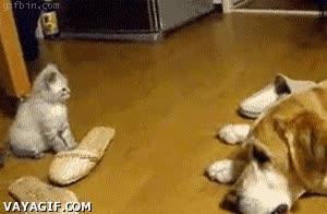 Enlace a Ataque Kitty