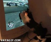 Enlace a Gato jugando al GTA