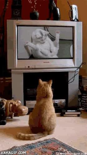 Enlace a Los gatos ninjas también miran porno