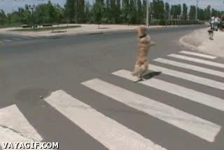Enlace a Corre, que el semáforo está en rojo